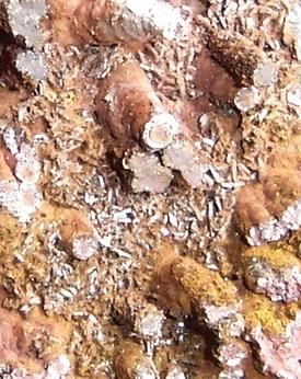 Cristales tabulares de goethita/hematita en espeleotemas (tamaño de la muestra- 6cm). Morro das Balas, Formiga, MG-Brasil (Autor: Anisio Claudio)