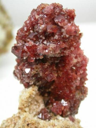 espinela roja en piña. Sierra de mijas. 6 cm x 3.5 cm (Autor: Jordi Fabre)