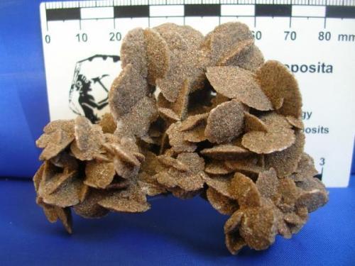 Rosetas de Yeso Rio Desaguadero San Luis Arg (1).jpg (Autor: Paola)