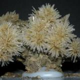 "Yeso ""bonsai"". Prados del Rey, Cádiz. 10 cm aprox (Autor: nimfiara)"