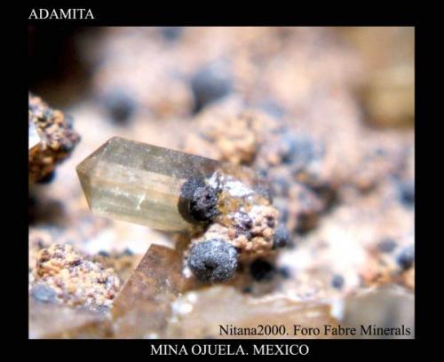 Adamita7.jpg (Autor: Juan de Laureano)
