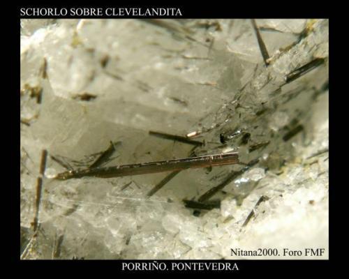 Schorlo Clevelandita.jpg (Autor: Juan de Laureano)