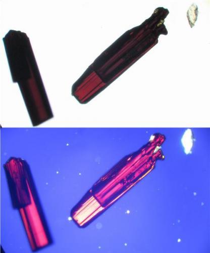 Pueden notarse las estrias sobre el cristal y su profundo color marrón rojizo. (Autor: Vinoterapia)