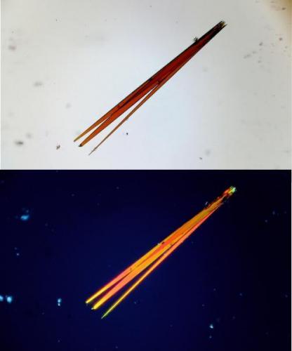 Conjunto de cristales aciculares (Autor: Vinoterapia)