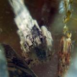 Fine Pix E550 + macro 14 dioptrías + objetivo de 35 mm. (Autor: Juan de Laureano)