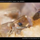 Inclusiones en Fluorita. Tamaño 2 mm. Procedencia Berbes. (Autor: Juan de Laureano)