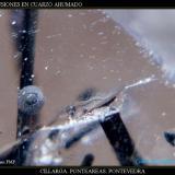 Inclusión Cuarzo ahumado.jpg (Autor: Juan de Laureano)