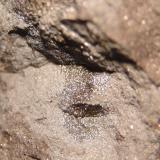Manganocrete con irizacion (0,5cm)- BR 354 C/ BR 262, Córrego Danta, MG-Brasil (Autor: Anisio Claudio)