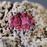 Mineral rojo ¿? 3mm Haüyna (Autor: Jose Bello)