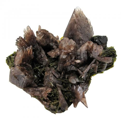 Axinite-(Mn), Epidote<br />Canta, Canta Province, Lima Department, Peru<br />74mm x 66mm x 59mm.  Major axinite crystal: 20 mm wide.<br /> (Author: Carles Millan)