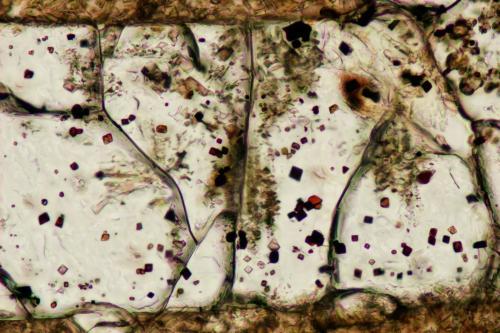 Espinela en Olivino<br />Volcán de Cancarix, Sierra de las Cabras, Cancarix, Hellín, Comarca Campos de Hellín, Albacete, Castilla-La Mancha, España<br />Campo de visión 350 micrones<br /> (Autor: Vinoterapia)