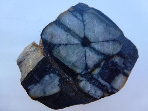 Andalucita (variedad quiastolita)<br />Yacimiento de Quiastolitas de Froseira, Froseira, Doiras, Boal, Comarca Eo-Navia, Asturias, Principado de Asturias, España<br />5,5 x 3,5 cm.<br /> (Autor: javier ruiz martin)