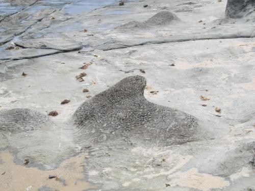 Caliza margosa  Estas son unas extrañas formaciones de las que ya alguien ha publicado fotos en el hilo. Están en Punta Paloma, Tarifa (Autor: JfRuiz)