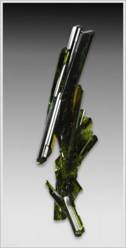 Epidote - Knappenwand - Untersulzbachtal - Austria - miniature (3.9 cm x 0.8 x 1.2cm) (Author: jaysminerals)