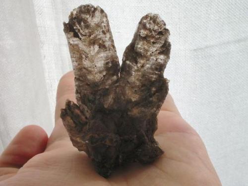 """""""Rabbit-ear""""-gypsum from the Tonberg claypit, Bad Freienwalde, Brandenburg. (Author: Andreas Gerstenberg)"""