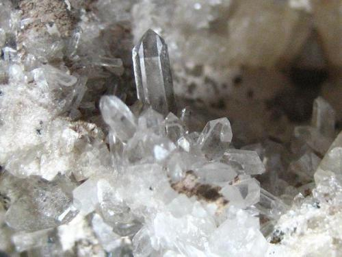 A tiny group of quartz crystals (largest 5 mm) that are often a nice feature of Schneckenstein topazes. (Author: Tobi)