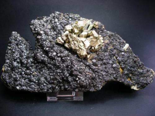 Pirita sobre magnetita. Mina La Herrería. Burguillos del Cerro. Pieza: 19 x 11cm. Cristal mayor de pirita: 2 cm. (Autor: Juan Cabezas)