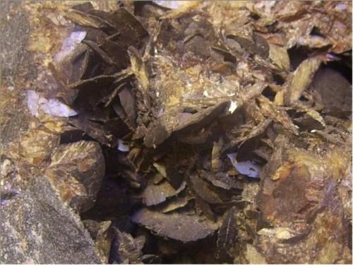 Siderita<br />Socavón Santa Bárbara (Túnel El Arteal), Sierra Almagrera, Cuevas del Almanzora, Comarca Levante Almeriense, Almería, Andalucía, España<br />8 x 8 cm.<br /> (Autor: Antonio Alcaide)