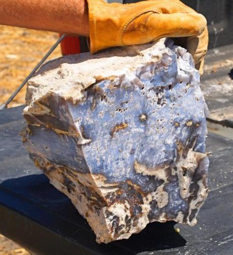Opalized wood Sickenius mine, Karnes Uranium District, Karnes Co., Texas, USA (Author: Paul Bordovsky)