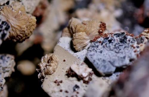 Titanita, hematites, chamosita, fluorita. Cillarga, Ponteareas (Pontevedra). 3 mm. (Autor: usoz)