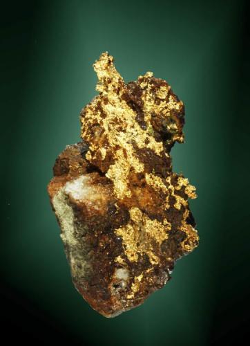 Oro Ballarat, Victoria, Australia. Star of the East (m). Crecimientos laminares en matriz de cuarzo filoniano con óxidos de hierro (ejemplar de 1979). 4,4 x 2,7 x 2,3 cm. (Autor: Carles Curto)