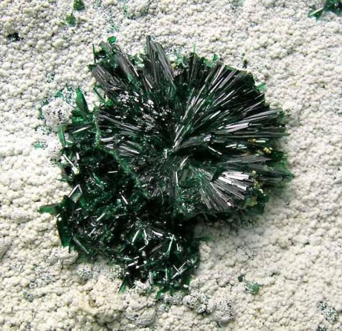 Atacamita en Hayllosita Mina La Farola, Cerro Pintado, Copiapó, Atacama, Chile  Encontrada hacia 1985 Roseta de cristales: 0.5 × 0.1 cm Foto: Minerales de Referencia (Autor: Jordi Fabre)
