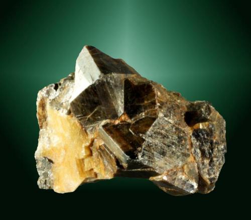 Casiterita Montehermoso, Las Hurdes, Cáceres, Extremadura, Espanya. Lucy (m). 1,8 x 2,3 x 1,1 cm. (ejemplar) / 1,2 x 1,4 x 1,1 cm. (cristal pral.) Dos cristales maclados (pico de estaño) de color marrón oscuro, en matriz de cuarzo. Ejemplar de 1971 (Autor: Carles Curto)