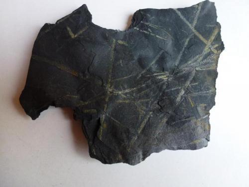 Pizarra con Graptolites<br />El Muyo, Riaza, Comarca Tierras de Riaza, Segovia, Castilla y León, España<br />12 x 10 cm.<br /> (Autor: javier ruiz martin)