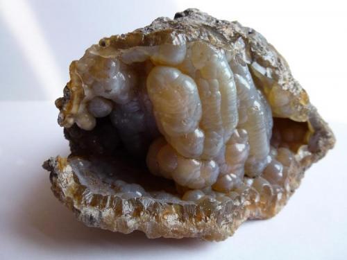 Calcedonia (Coral Agatizado) Tampa, Florida, USA 8 x 8 cm. (Autor: javier ruiz martin)