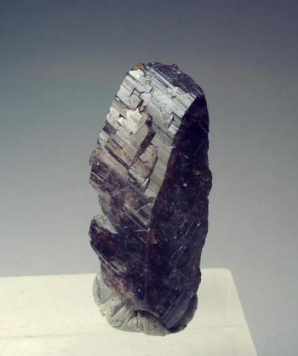 Axinita-(Fe) Casterner de les Olles - Serra de Sant Gervàs - Tremp - Lleida - Catalunya -España 29 x 13 x 0,7 mm (Autor: Joan Martinez Bruguera)