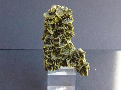 Clinozoisita  Cantera Los Serranos, Hondón de los Frailes, Albatera, Alicante, Comunidad Valenciana, España 5 x 2 cm. (Autor: javier ruiz martin)