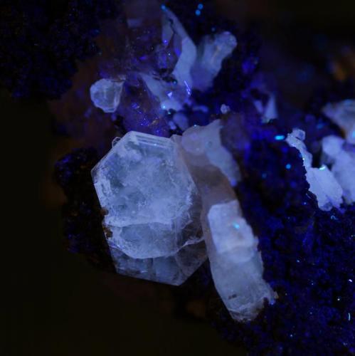 Fluorapatito con clorita y cuarzo (UV-OL) Arestui, Llavorsí, Pallars Sobirà, Lleida 6x5x4 cm. Cristal 10mm. (Autor: Joan Rosell)
