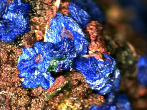 Azurite and Malachite on Limonite covered Quartz. M'Cissi, Er Rachidia, Morocco 2mm x 2mm (Author: Mark Ost)