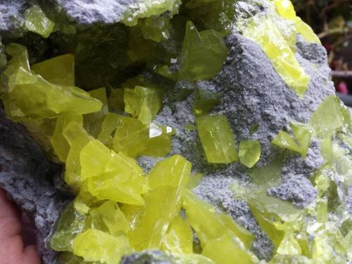 Azufre El Aila, Laredo, Cantabria, España 16x13x14cm cristales de hasta 3cm (Autor: PabloR)
