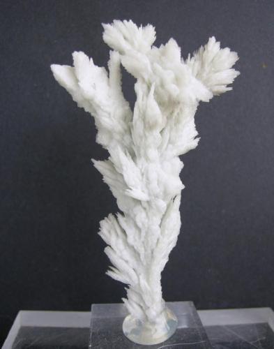 Barita Mina San Camilo, Vista Alegre, Sierra Minera de Cartagena-La Unión, Cartagena, Murcia, España 8 x 4.7 cm (Autor: Diego Navarro)