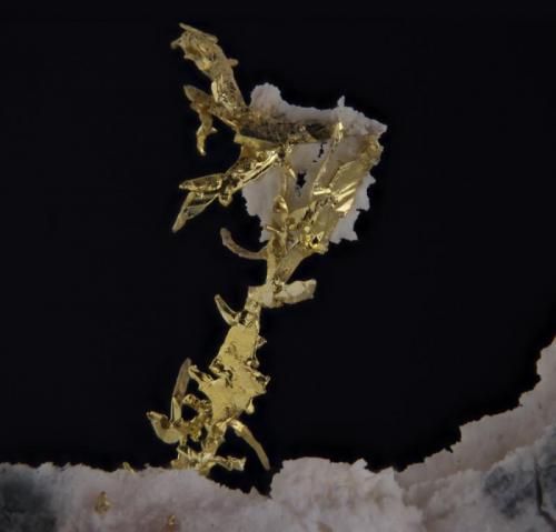 Oro Nevada. USA. 4mm de altura del oro La cosa ha cambiado mucho, el oro está mucho más iluminado, la calidad es mejor y no se dan brillos indeseados. (Autor: Oscar Fernandez)