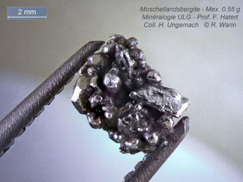 Moschellandsbergite Mexico 7  mm exceptional crystals (Author: Roger Warin)