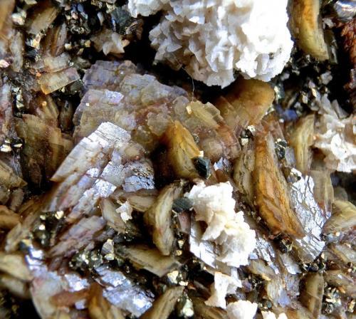 Siderita, calcopirita, Ankerita-Dolomita Series Mina la Gitana, Abanto-Zierbena, Vizcaya, España. Ancho de imagen 2,5 cm. (Autor: María Jesús M.)