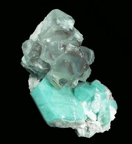 Fluorite on Microcline (v. Amazonite) Confetti Pocket, Smoky Hawk Mine, Buckner Pegmatite, Florissant, Teller Co., Colorado, USA  79 x 52 x 35 mm overall  A cluster of Fluorite crystals to 18 mm is perched on rich-blue-green, tabular Amazonite crystals to 25 x 23 mm. This is one of two pieces found in the pocket, and is the best of the two. (Author: GneissWare)