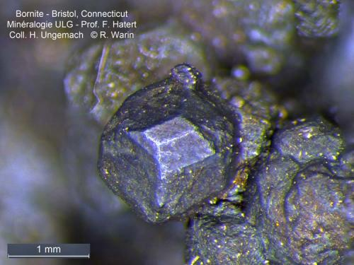 Bornite Bristol, Connecticut USA fine crystal (Author: Roger Warin)