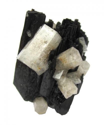 Beryl (variety goshenite) on schorl<br />Erongo Mountain, Usakos, Erongo Region, Namibia<br />Largest beryl 13 mm, specimen height 4 cm<br /> (Author: Tobi)