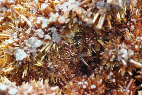 Vanadinita (variedad endlichita)<br />Mina Erupción (Mina Ahumada), Sierra de Los Lamentos, Municipio Ahumada, Chihuahua, México<br />35x28 mm<br /> (Autor: Juan Espino)