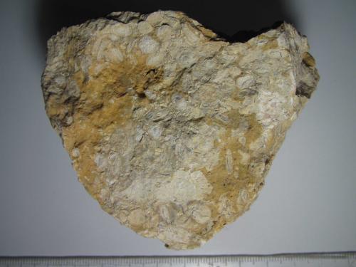 Caliza pisolítica<br />Crickley Hill, Cheltenham, Gloucestershire, Inglaterra, Reino Unido<br />8 x 7 cm.<br /> (Autor: prcantos)