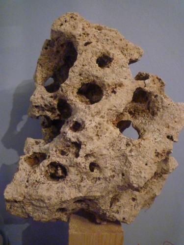 Calizas arrecifales. El Estanyol de Mitjorn, Llucmajor, Mallorca, Islas Baleares, España. 37 x 26 x 19 cm. Roca afectada por meteorización de tipo kárstico, formada supuestamente en el Mioceno. (Autor: Rafael varela olveira)