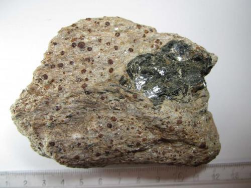 Micaesquisto con granate Charches, Granada, Andalucía, España 9 x 7 cm. Esquisto micáceo con granates, que a veces alcanzan tamaños centimétricos en la zona.  Contiene un agregado de cristales de color verde oscuro (también algunos sueltos por toda la roca) que pueden ser biotita y anfíboles procedentes de las anfibolitas cercanas, probablemente incorporados aquí como fruto de la complejidad tectónica de la zona. (Autor: prcantos)