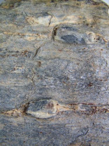 Esquisto con quiastolita (metacorneana con quiastolita) Charches, Sierra de Baza, Granada, Andalucía, España 4 cm. ancho de campo Detalle de los porfiroblastos de quiastolita en la roca anterior. (Autor: prcantos)