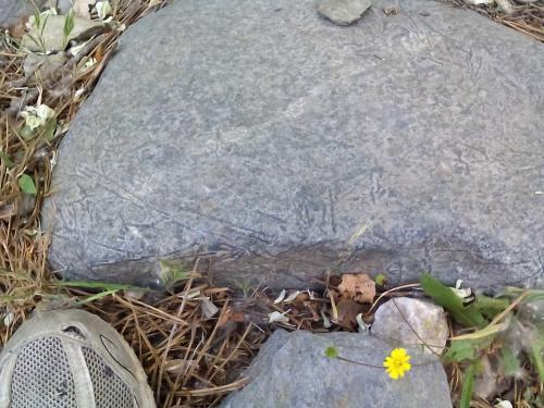 Metaperidotita Laujar de Andarax, Almería, Andalucía, España Otro fragmento de roca, con largos cristales filiformes de olivino de hasta unos 10 cm. (Autor: prcantos)