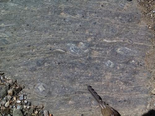 Micaesquisto grafitoso con quiastolita (metacorneana quiastolítica)<br />Laujar de Andarax, Comarca Alpujarra Almeriense, Almería, Andalucía, España<br /><br /> (Autor: prcantos)