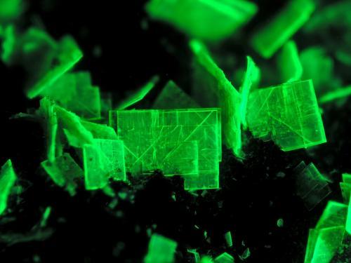 Autunite<br />Senhora da Assunção Mine, Aldeia Nova, Ferreira de Aves, Sátão, Viseu District, Portugal<br />FOV 5 mm<br /> (Author: Cesar M. Salvan)