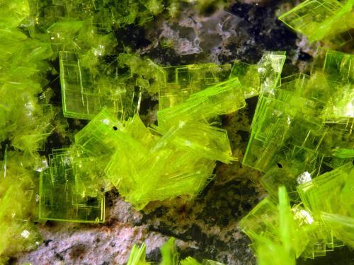 Autunite<br />Senhora da Assunção Mine, Aldeia Nova, Ferreira de Aves, Sátão, Viseu District, Portugal<br />FOV 1 cm<br /> (Author: Cesar M. Salvan)